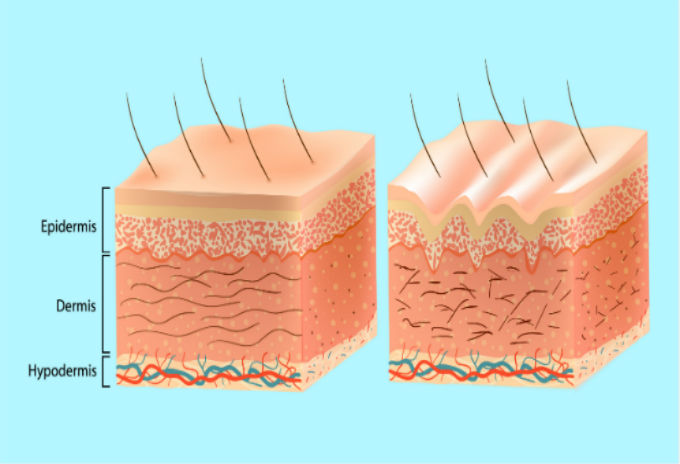 The Three Layers Of Your Skin Skin Institute